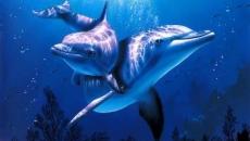 Aquamarine – Raio de Cura dos Golfinhos