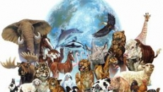 Gaia Animal Reiki